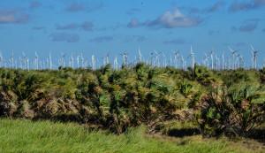 Windmills 5 (1 of 1)
