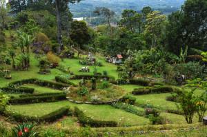 view of garden (1 of 1)